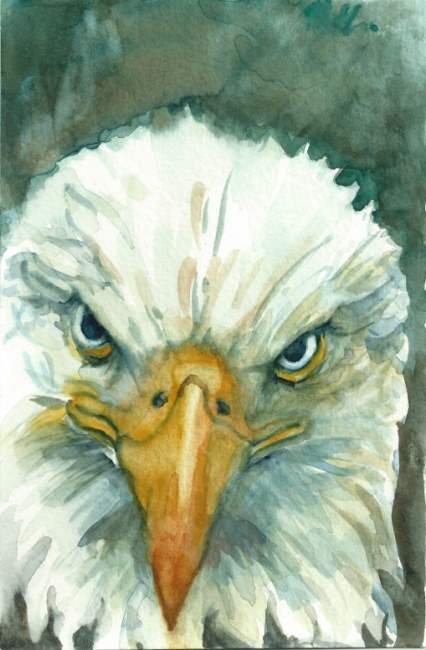 Bald eagle painting - Baldy