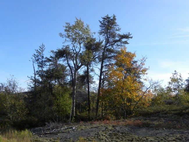 Rocky Landscape With Rustic Autumn Trees