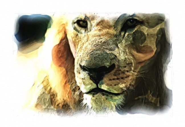 Look Of The Lion