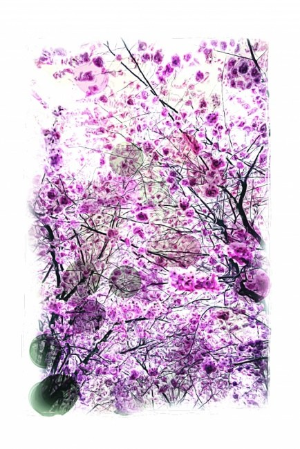 Purple Flowered Trees