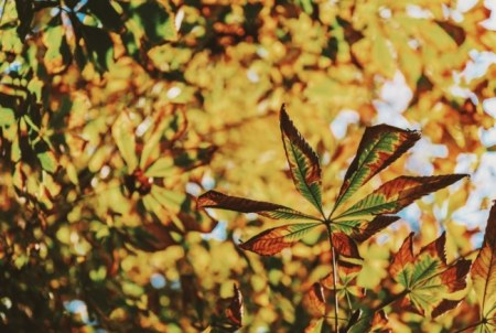 Green And Yellow Autumn Leaves