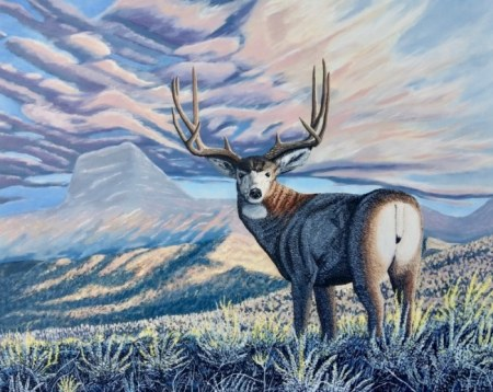 Mule Deer in the Rocky Mountains