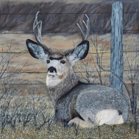 Mule Deer in the brush
