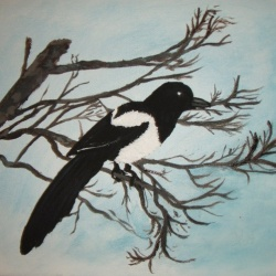 Magpie SOLD and moved to Sweden