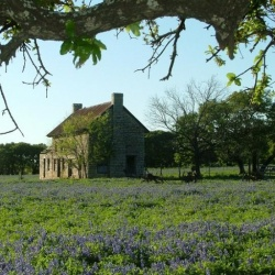 Old German House in Texas Bluebonnets
