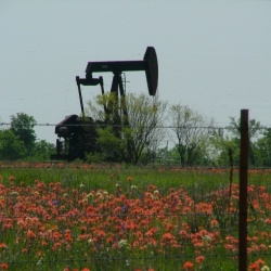 Texas Oil Pump Unit in Field of Wildflowers