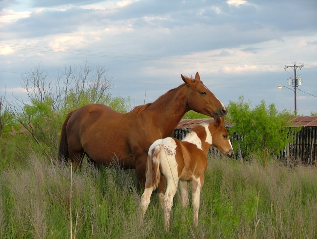 Mare and Brown/White Colt