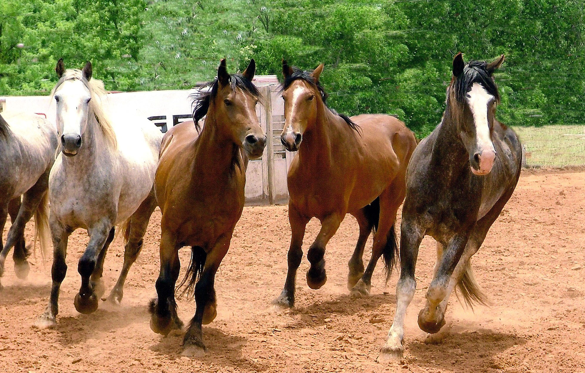 Running horses pictures - photo#16