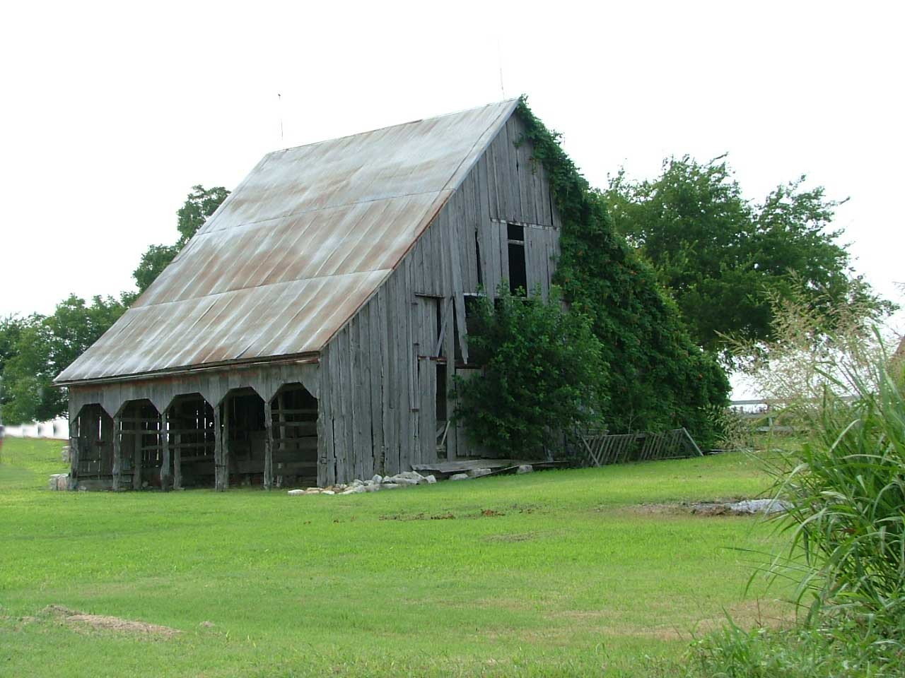 Old wooden barn with Ivy.
