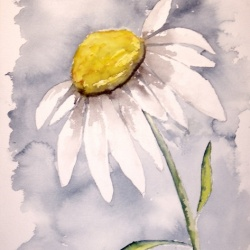 Daisy Flower Art Print