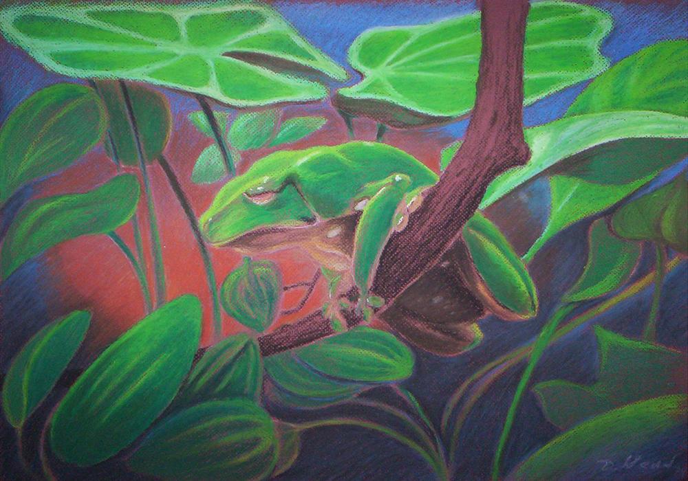 Wax Tree Frog | Daniel Wend | Foundmyself