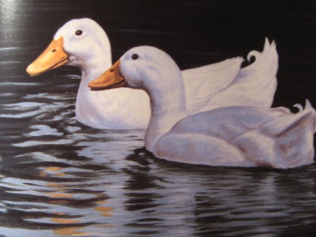 Two ducks on water