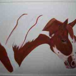 Horse piebald portrait SOLD