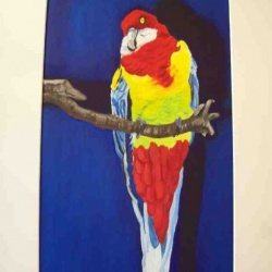 Rainbow Parrot oil painting