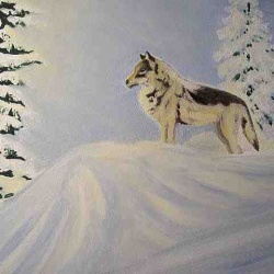 Lone wolf oil painting SOLD