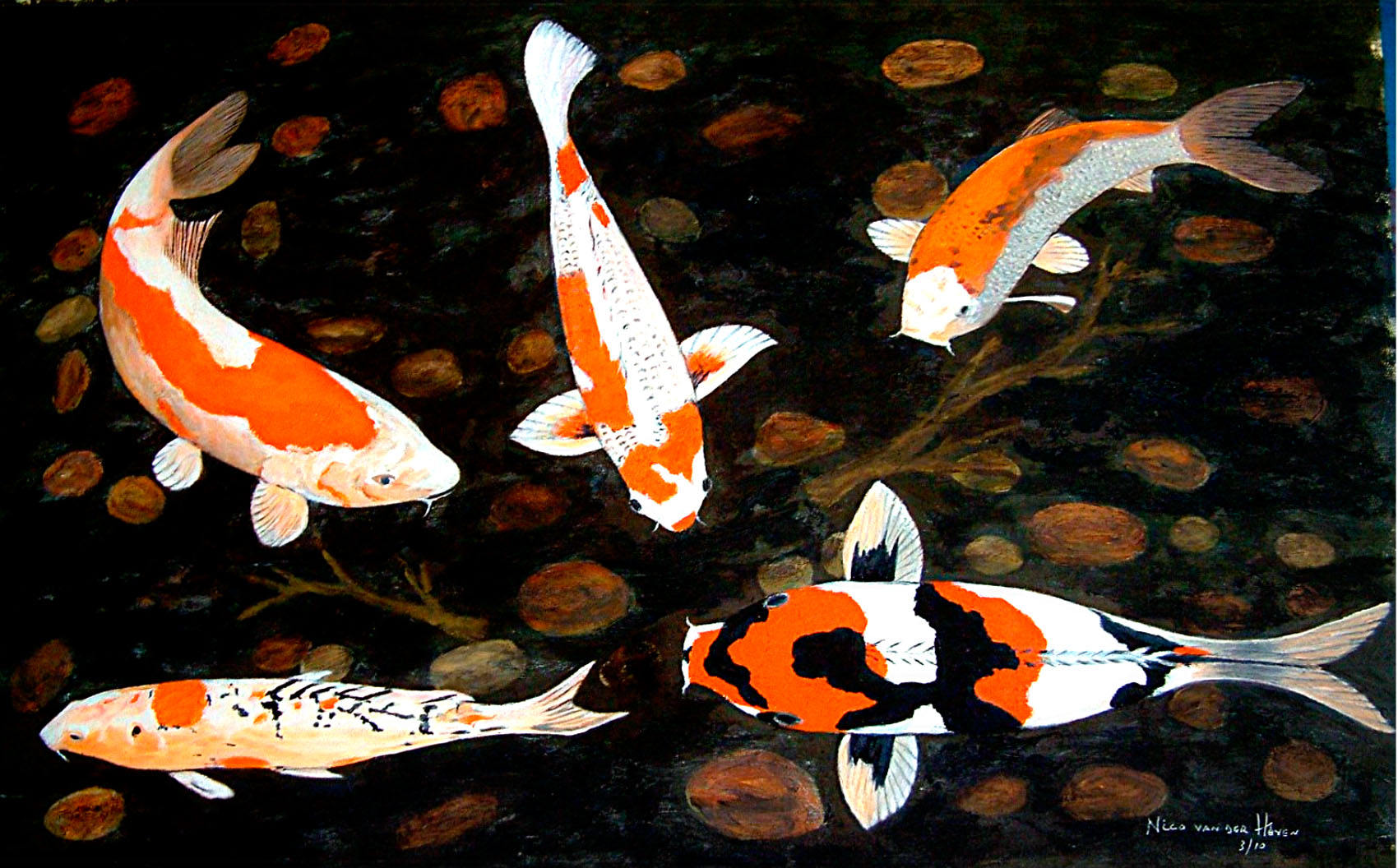 Real koi fish for Pics of koi fish