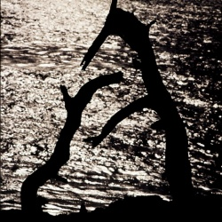 'The Lobos Brothers'