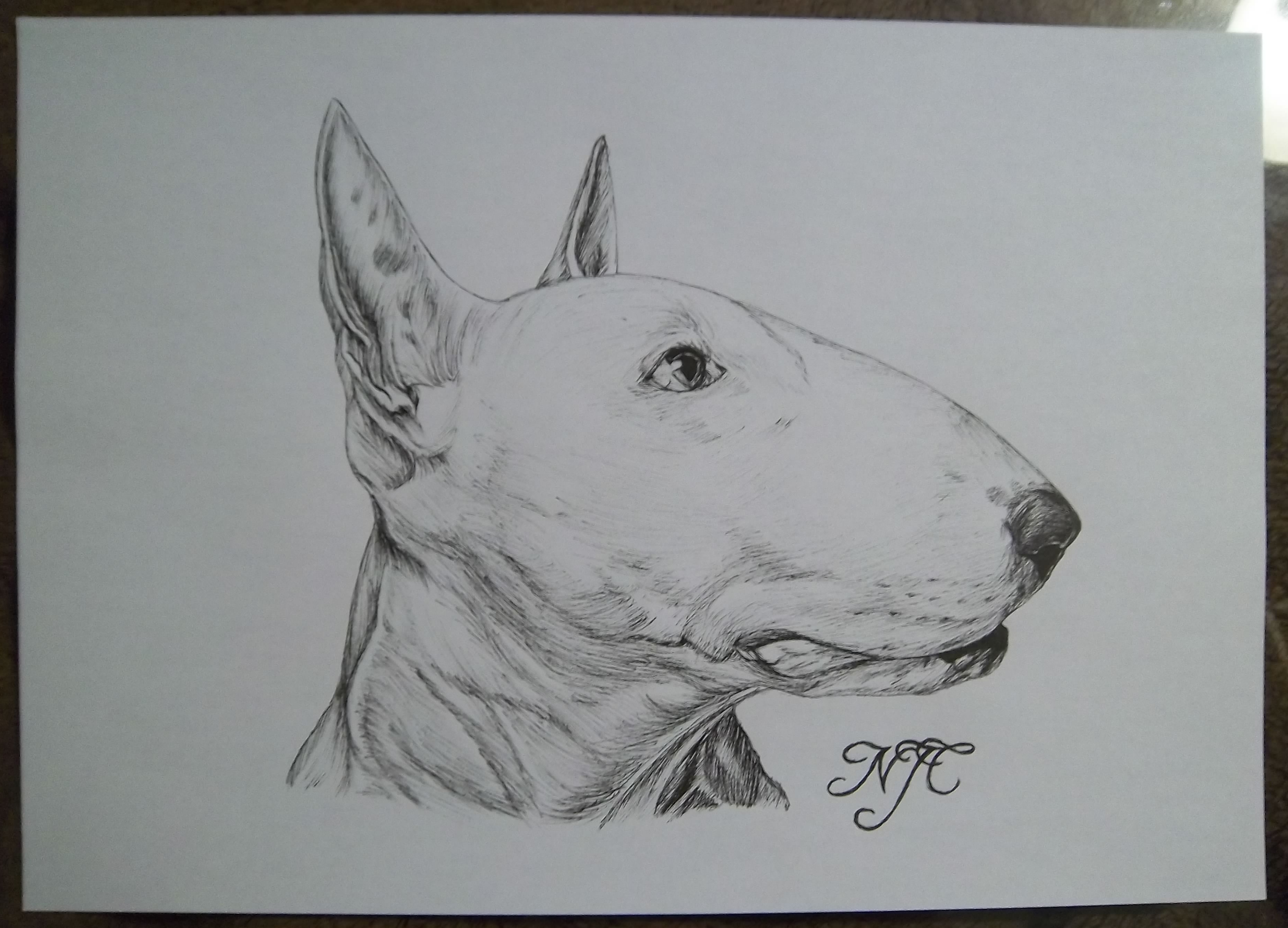 Pics Photos - English Bull Terrier Pen Sketch