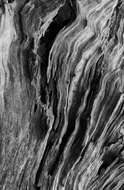 Sinuous Bark