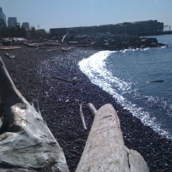 Pocket Beach in Seattle