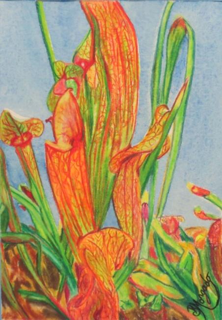 Nepenthr Pitcher Plant 1