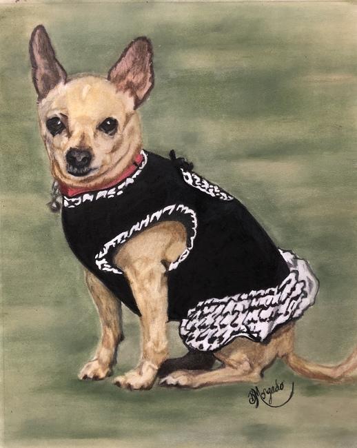 Chula  The Chihuahua