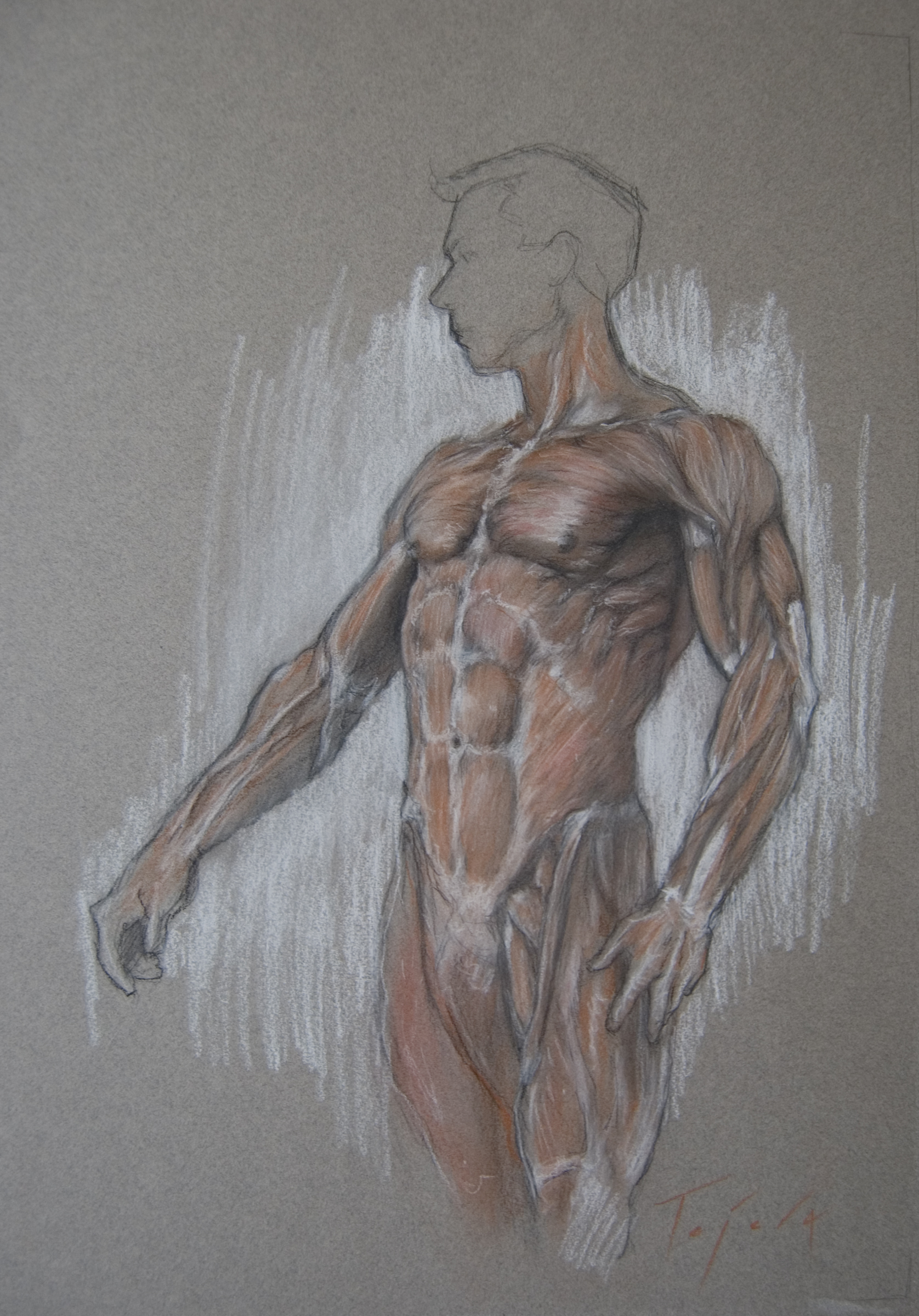 Torso Anatomy | JTejera_Art | Foundmyself