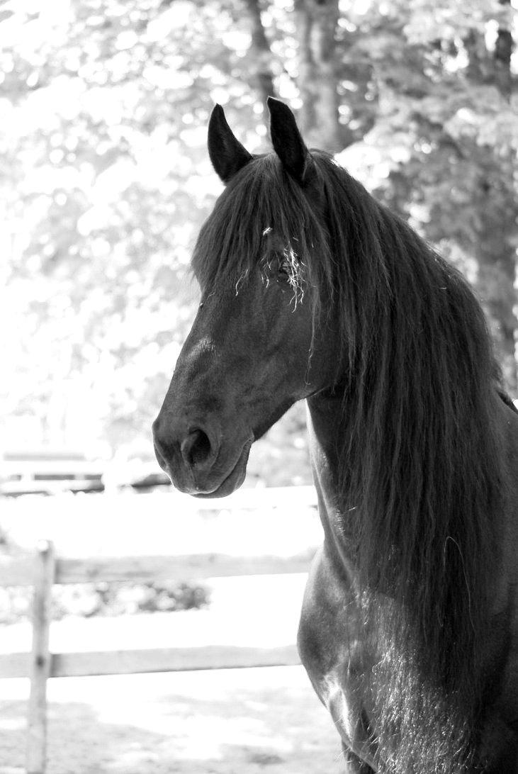 Black and white onlyyoucan foundmyself