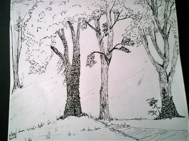 Tree study with ivy sketch