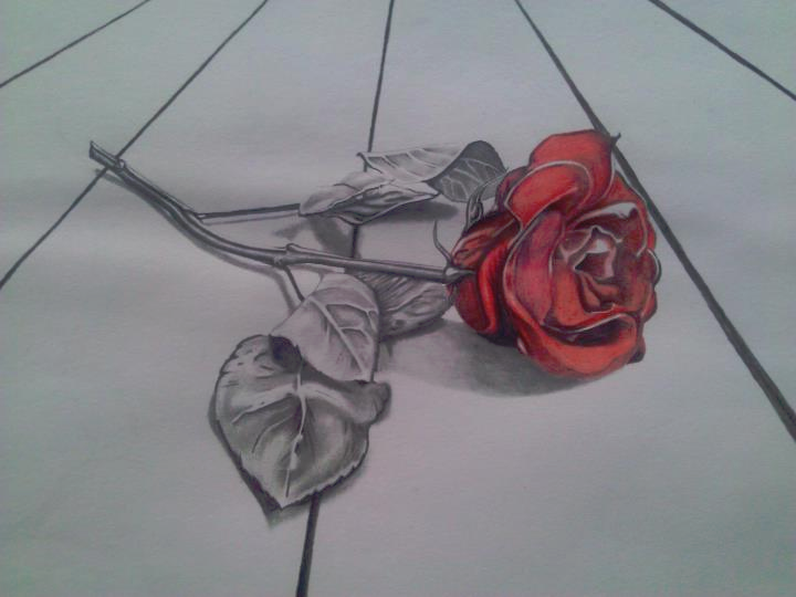 how to draw : 3D rose card (page 2) How To Draw 3d Rose Queen Butterfly Vs Monarch