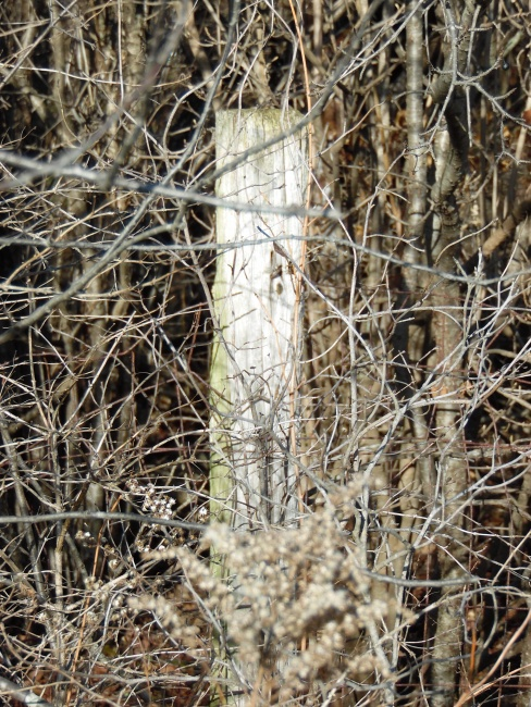 Forgotten Fence Post