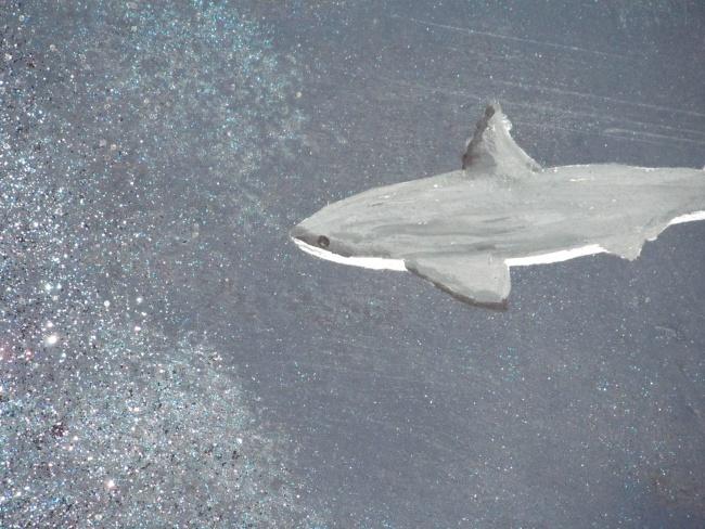 Virgin Ocean Journey - Shark Close Up