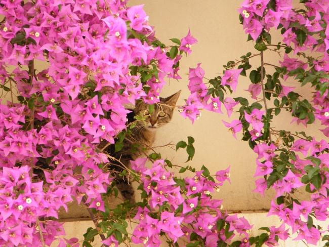 Moroccan Flora & Faua 1