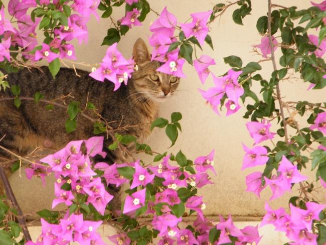 Moroccan Flora & Fauna 3