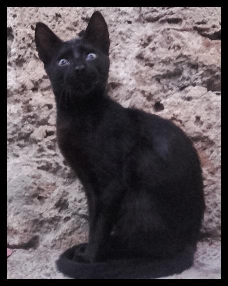 """Moroccan Street Cat"""