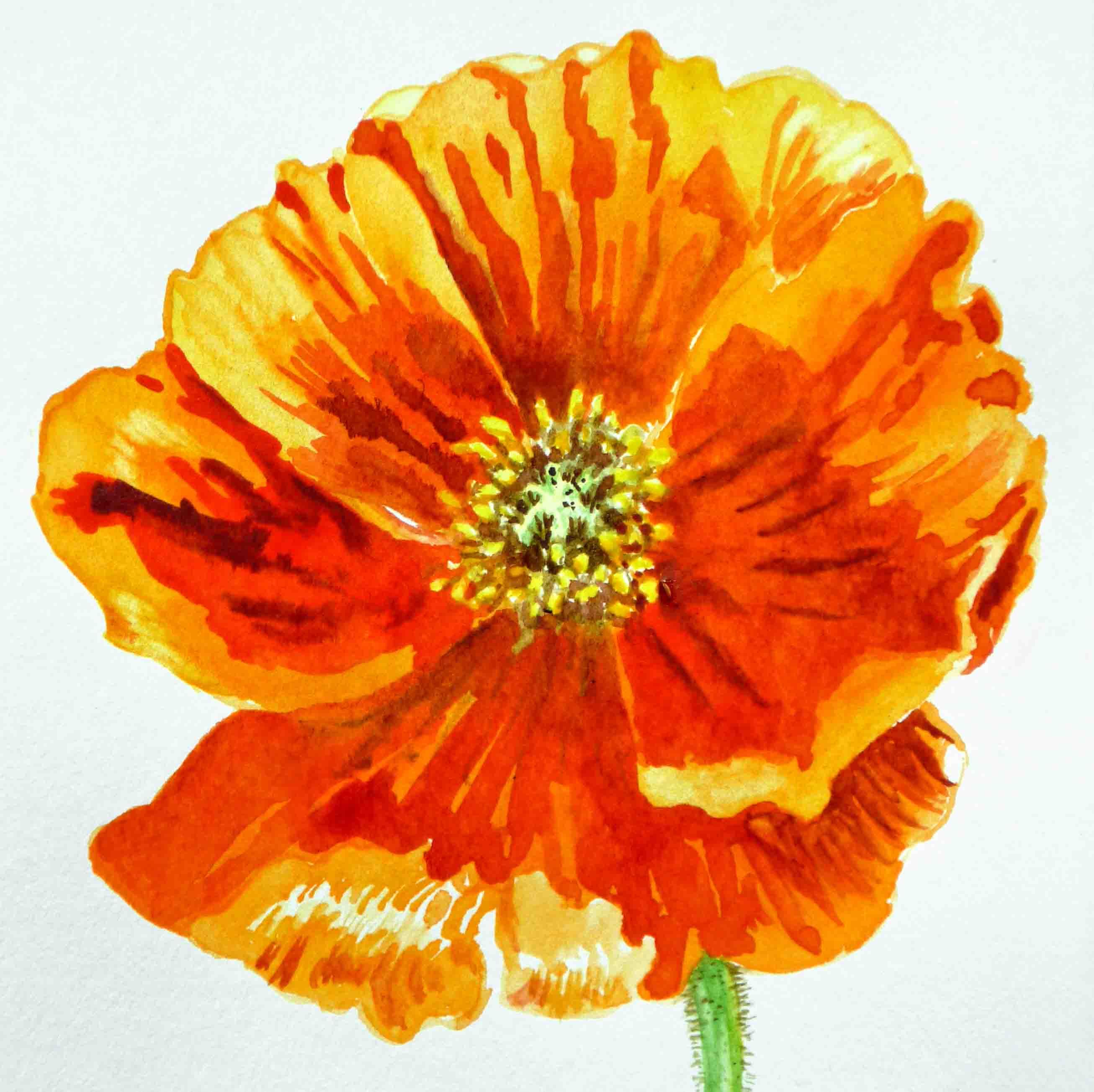 Poppy Flower Irinasztukowski Foundmyself