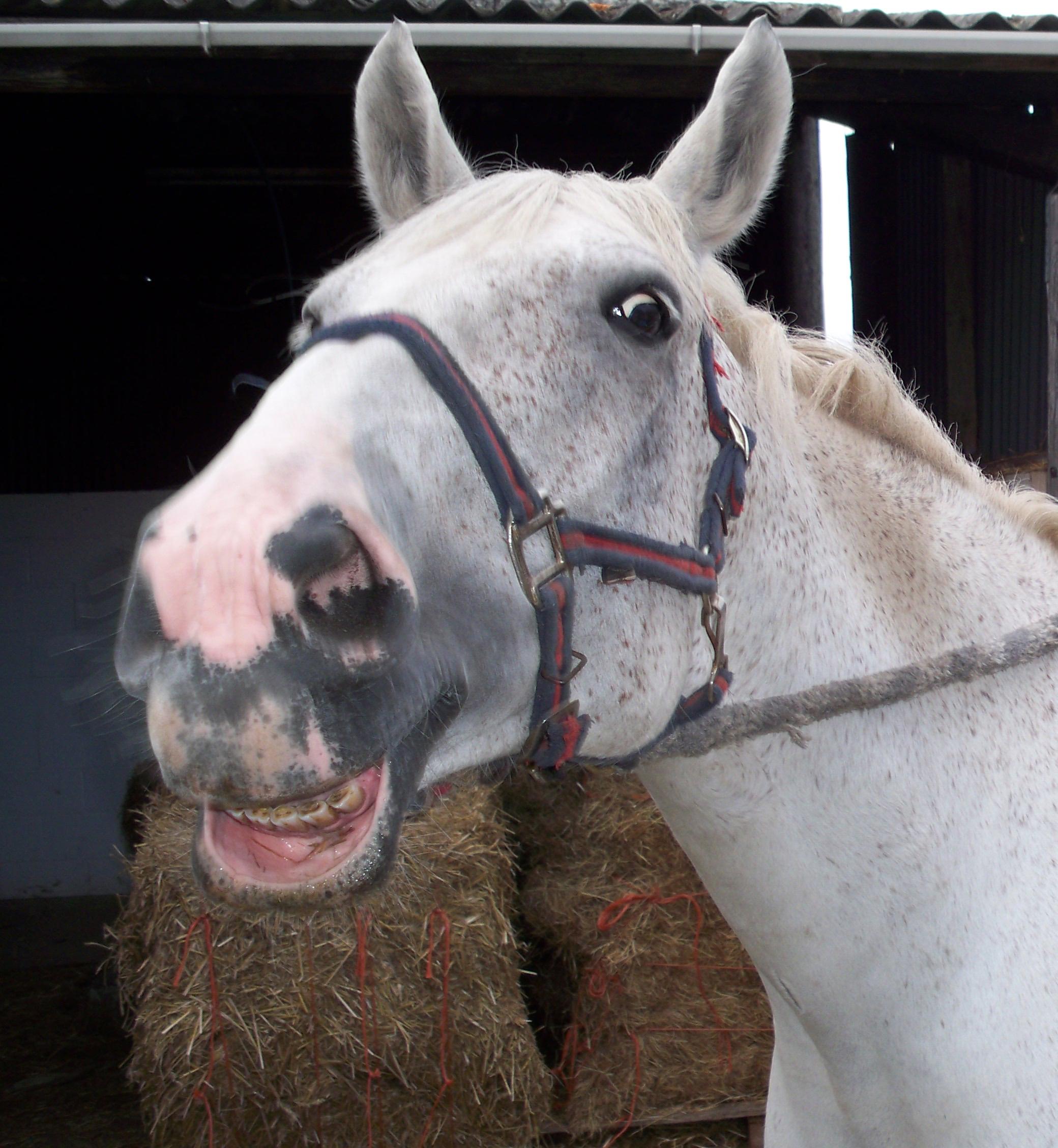 Uncategorized Smiling Horse smiling horse miorslaw foundmyself horse