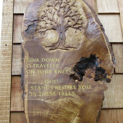 Tribute to a Tree