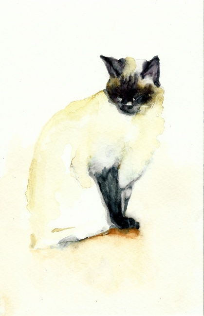 Siamese Cat on Rock
