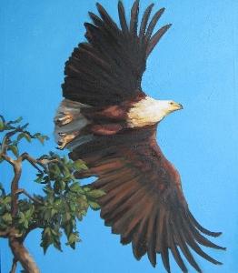 Fish Eagle Takes Flight