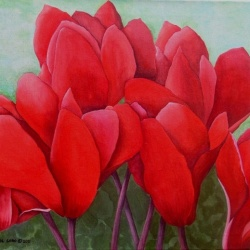 Red Cyclamens