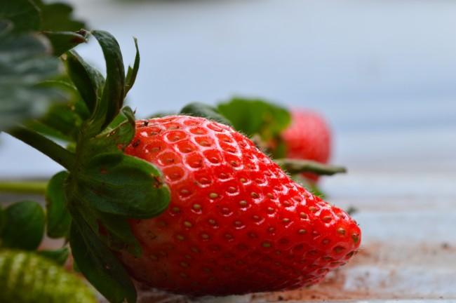 Strawberry Photograph