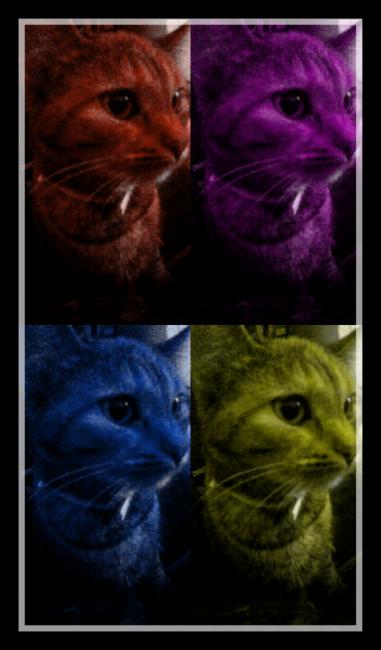 Kitty Amazing is Art
