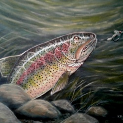Red band trout