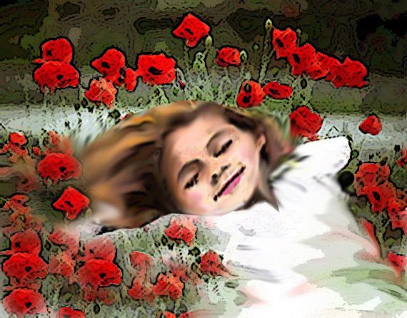 Amistd the poppies