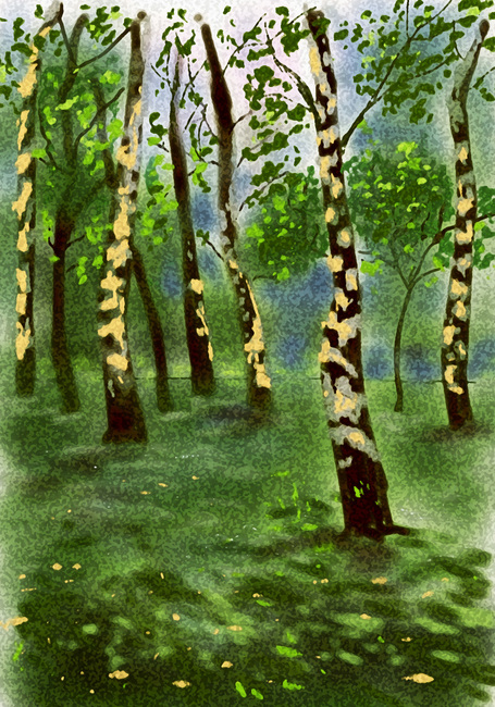 Birchwood trees