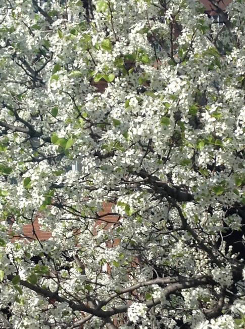 The aromas of Spring