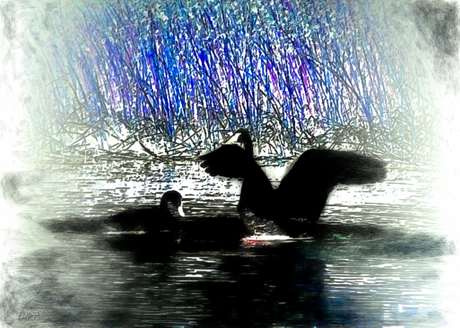 Black Swans in the Morning Mists