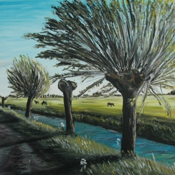 Pollard willows trees along ditch Rijnenburg Netherlands