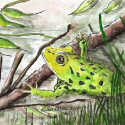 Happy Green Frog - Ink and Watercolor Painting